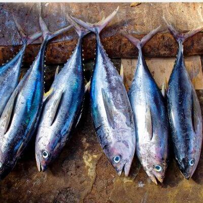 pescado-atun